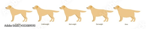 Photo Collection of cartoon cute dog weight stages vector flat illustration