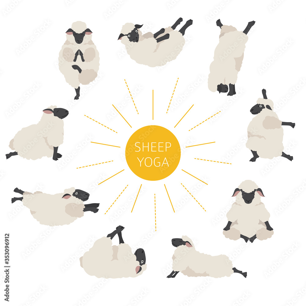 Fototapeta Sheep yoga poses collection. Farm animals set. Flat design