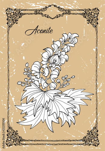 Vector black and white drawing of aconite flower on texture background Canvas Print