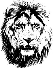 Hand Drawn Wild Animal. Lion. Vector Isolated On A Transparent Background