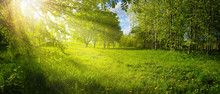 Bright Sun Rays Break Through Greenery Trees In Park On Sunny Day In Nature Outdoor. Bright Colorful Summer Landscape With Juicy Grass And Trees. Wide Format.