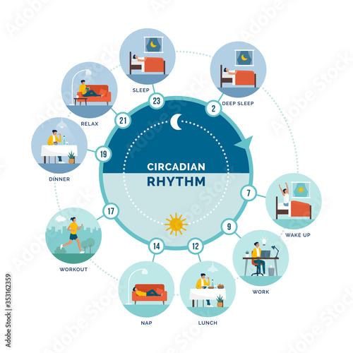 Obraz Circadian rhythm and daily activities - fototapety do salonu