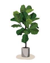 Beautiful Fiddle Leaf Tree In Ceramic Pot On White Background. Ficus Lyrata Vector Illustration. Stylish Houseplant Design Element For Modern Interior Room