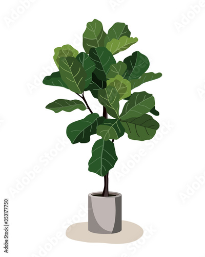 Fotografia, Obraz Beautiful fiddle leaf tree in ceramic pot on white background