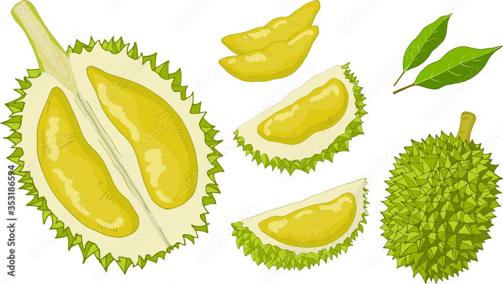 Fototapeta Durian Set Isolated Items