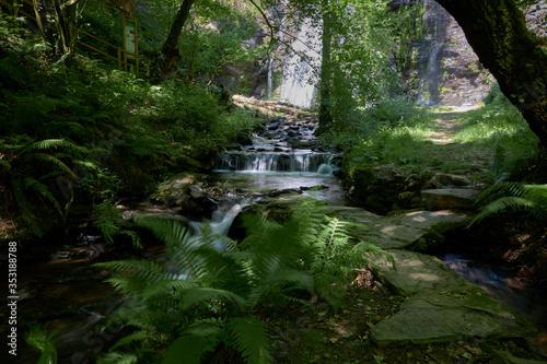 Fototapety, obrazy: Río con cascada en un bosque frondoso