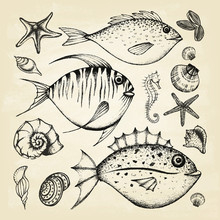 Set Of Hand Drawn Elements Sea...