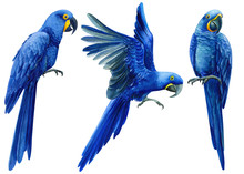 Set Of Hand-drawn Watercolor Birds, Macaw Hyacinth Parrot On An Isolated Transparent Background, Tropical Illustration