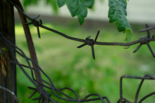 Old Rusty Barbed Wire Close Up Shot. Abandoned Wire On The Green Background. Rusty Metal Construction Near The Abandoned Factory.