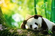 Giant Panda Wearing A Bamboo H...