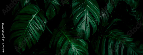 tropical leaf, abstract green leaf texture, nature background Fotobehang