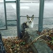 Cat behind a silver metal fence during daytime