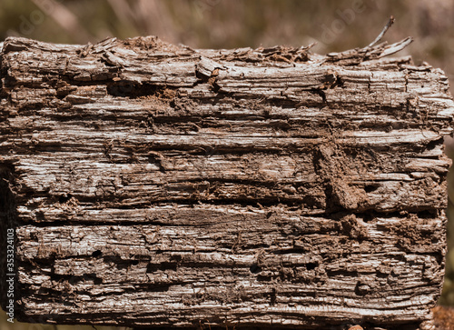 Driftwood/aged wood over green grass background Wallpaper Mural