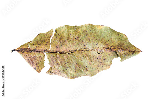 Vintage dry leaf isolated on a white background Wallpaper Mural