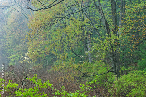 Landscape of spring forest at edge of marsh with dogwood in bloom, Yankee Springs State Park, Michigan, USA