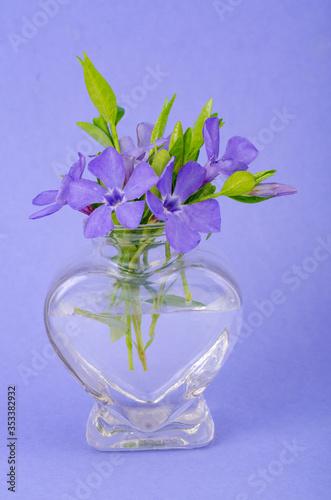 Fototapeta Small glass vase with purple flowers. Photo obraz na płótnie