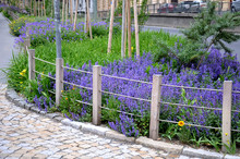 The Flowering Flower Bed In Th...