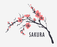 Sakura Branch With Flowers. Vector Illustration