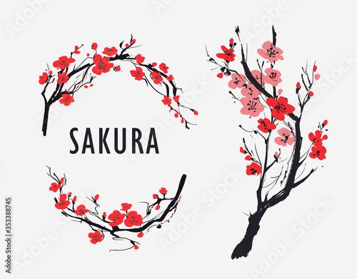 Fototapeta Sakura branch with flowers. Vector illustration