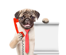 Pug Puppy Uses A Retro Phone O...
