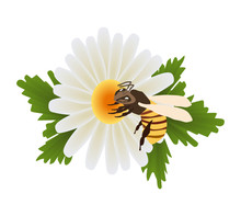 Chamomile Flower With Leaves With A Bee On It
