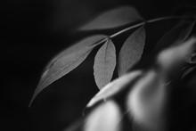 Black And White Fine Art Plant...