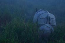 A Selective Focus Image Of Backs Of A Mother Rhino And Its Little Baby Behind It On A Foggy Winter Morning In Low Light Before Sunrise During An Early Morning Safari At A National Park In Assam India
