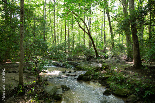 creek in woods - 353431962