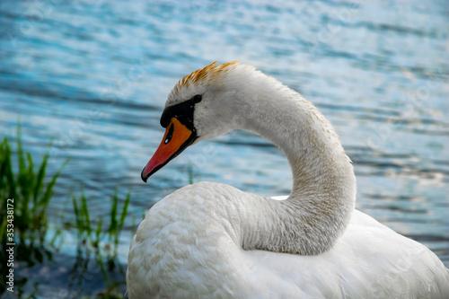 Fototapeta Bocian nad zalewem w Brodach, wyjątkowo ostry jak na sprzęt którym zrobiłem zdjęcie :) obraz