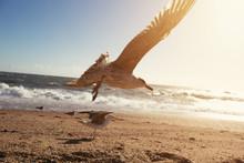 Flying Seagull On Sunny Ocean ...