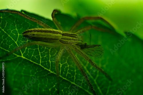 Jakiś pająk je jakąś muszkę - 353438973