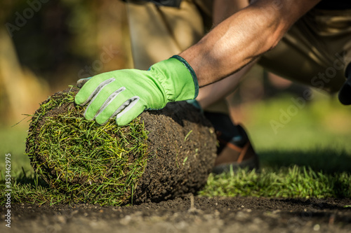 Obraz Gardener Installing Natural Grass Turfs in Garden - fototapety do salonu