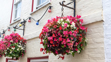Beautiful Wax Begonia Flowers (begonia Semperflorens) In A Hanging Baskets Against Brick Wall. Begonias In Various Vibrant Colors - Pink, Red, White And Purple