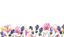 Watercolor Hand Painted Nature Floral Line Banner Composition With Purple Lavender And Pink Honeysuckle Flowers On Branch On The White Background For Invite And Greeting Card With The Space For Text
