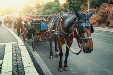 Romantic Carriage With Horse N...