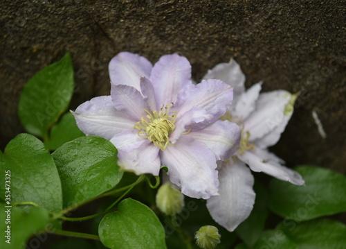 Fototapeta pink and white flowers obraz na płótnie