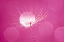 Pink Flower On A Black Background