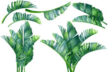 Set Of Tropical Plants, Palm L...