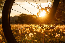 Bicycle Wheel In The Field At Sunset. Close-up Of A Hydraulic Brake Disc
