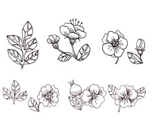 Set Of Black And White Graphic Elements Of Flowers, Fruits And Leaves Of Rosehip. Linear Drawing
