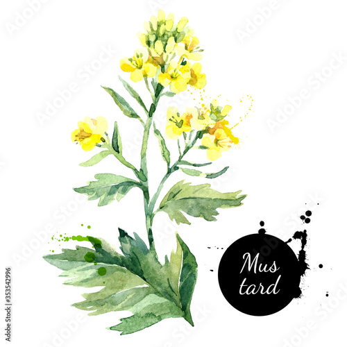 Watercolor hand drawn wild mustard flower illustration Canvas Print