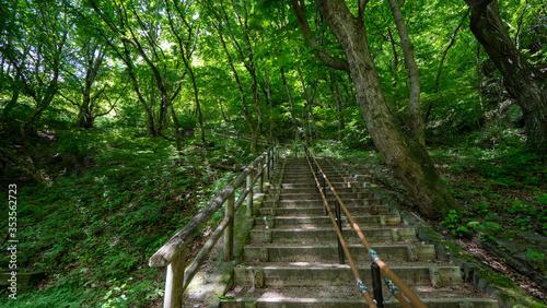 Photo 新緑の階段in群馬 碓氷