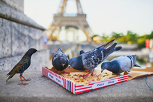 Birds Eating Pizza Leftovers Near The Eiffel Tower