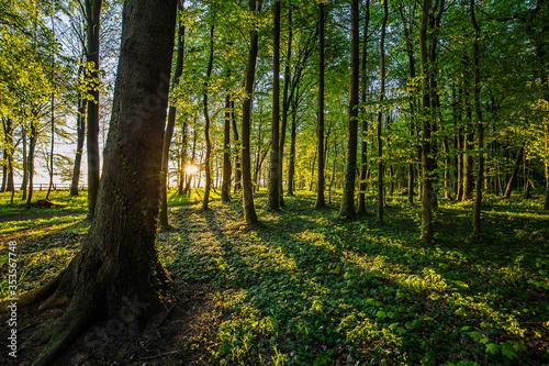 Fototapeta Piękny wschód słońca w nadmorskim parku. Promienie wschodzącego słońca przebijające przez korony drzew. obraz