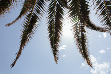 Bottom view of branches of palm tree with sunshine and blue sky with clouds at background