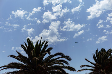 Low angle view of palm trees and plane in blue sky with clouds