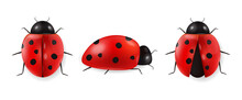 Realistic Ladybug Set Isolated, Hello Spring, Red Insect, Beauty Ladybug Detail, White Background Vector
