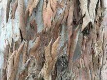 Fringe Bark Tree Trunk