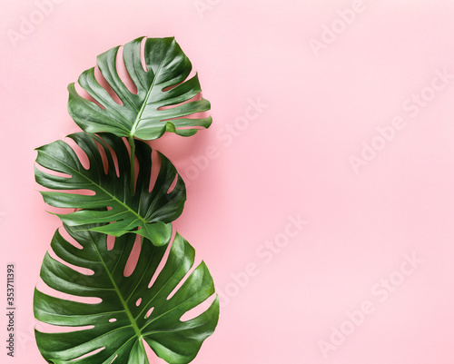 Plakat w ramce 40x30 cm Creative arrangement of monstera leaves on pastel pink background with copy space