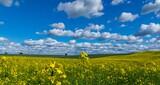 Pole i rzepak piękne niebo i chmury